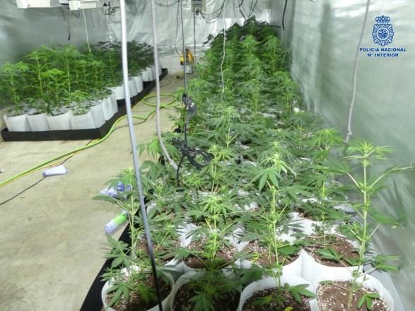 marihuana en Andújar