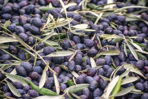 COAG sobre el aceite de oliva