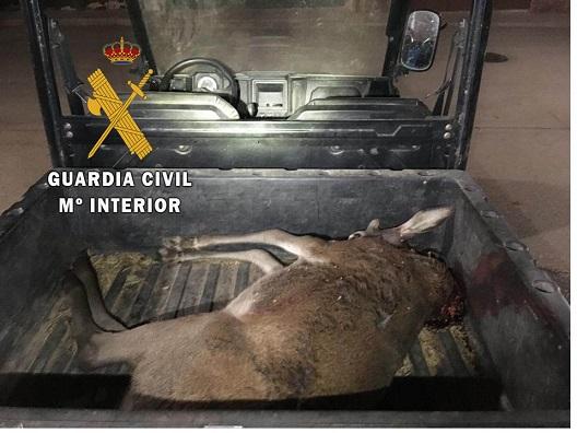 La Guardia Civil abre expediente sancionador a un cazador furtivo en Montizón.