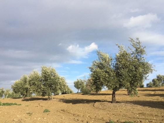 Movilizaciones del sector del olivar