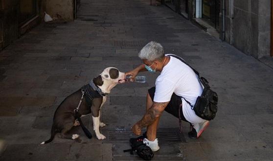 Andalucía tendrá una nueva ley de Bienestar Animal.