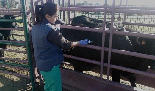 Más de 600 profesionales de la veterinaria garantizan a diario la protección de la salud de los andaluces.