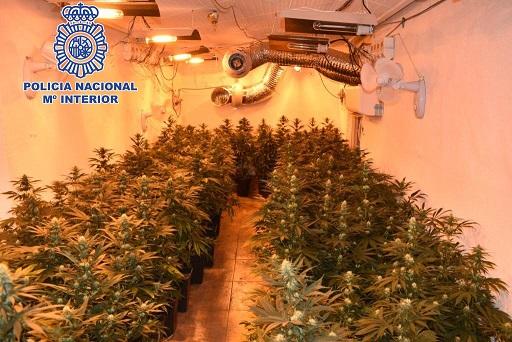 La Policía Nacional detiene en Jaén a una persona que gestionaba una plantación de marihuana.