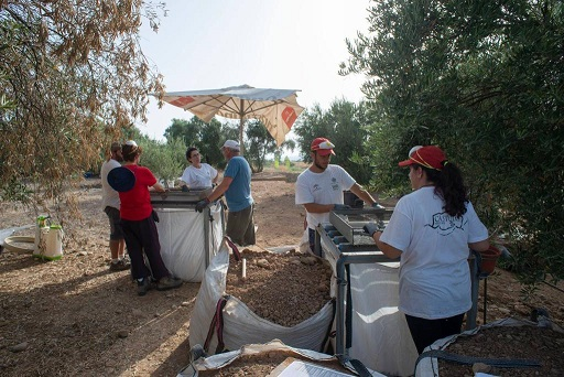 El IAJ aprueba dos Campos arqueológicos de Voluntariado Juvenil para Jaén, que actuarán en Cástulo (Linares) y en el Castillo de Bedmar.