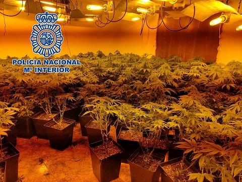 La Policía Nacional detiene en Linares a tres personas que gestionaban tres plantaciones de marihuana.