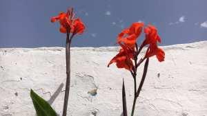 Einige Blumen