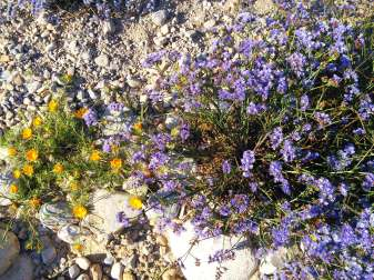 camping-aourir-gallery-yellow-and-blue-flowers