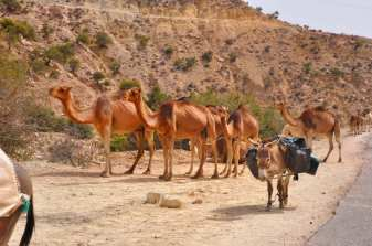 camping-aourir-morocco-outside-the-camping-29-2014