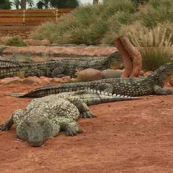 Crocoparc Agadir