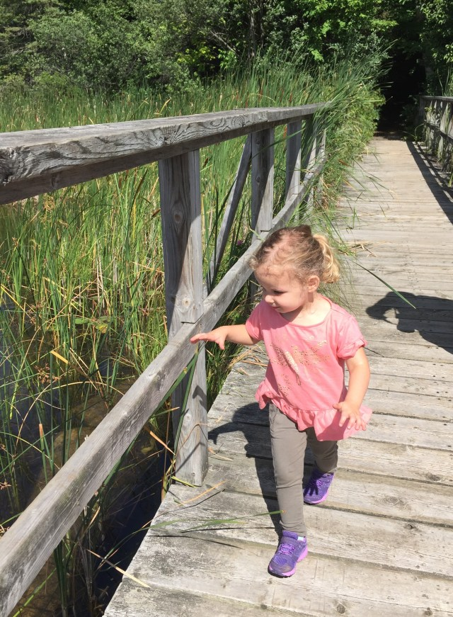 Exploring the bridge on Wendat Trail