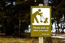 Health and Safety Tips for Camping With Your Dogs 3