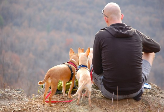 Hammock Camping With Dog