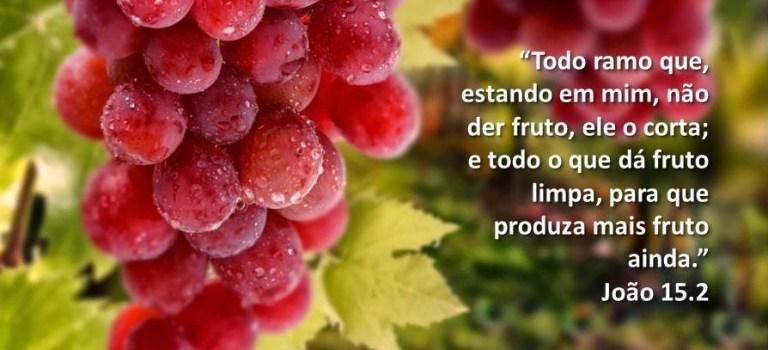 Os galhos que dão fruto