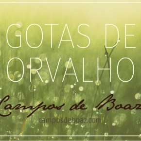 Gotas de Orvalho (100) - Edição especial