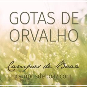 Gotas de orvalho (223)
