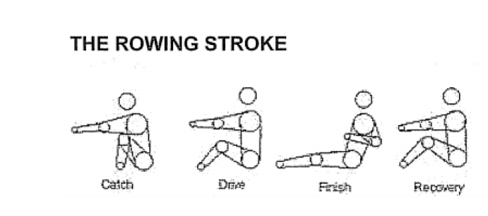 diagram of rowing stroke