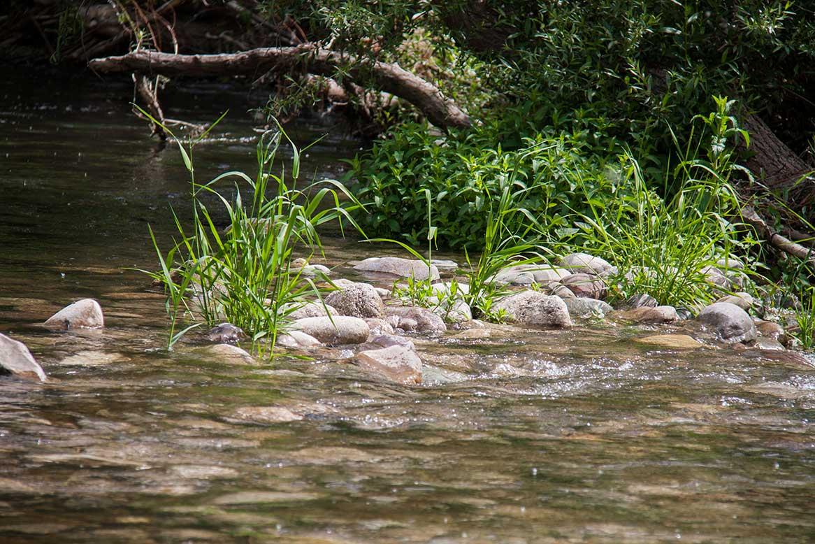 Pesca en el Najerilla