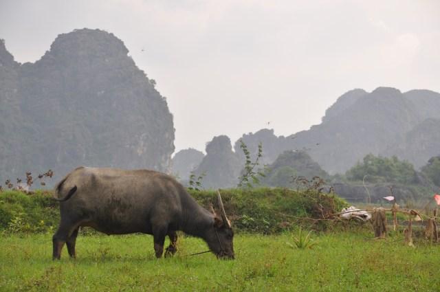 Village inhabitant