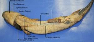 Comparative Anatomy Atlas