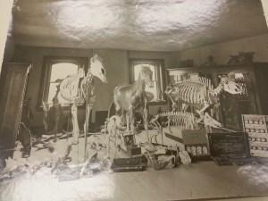 Veterinary Lab model room