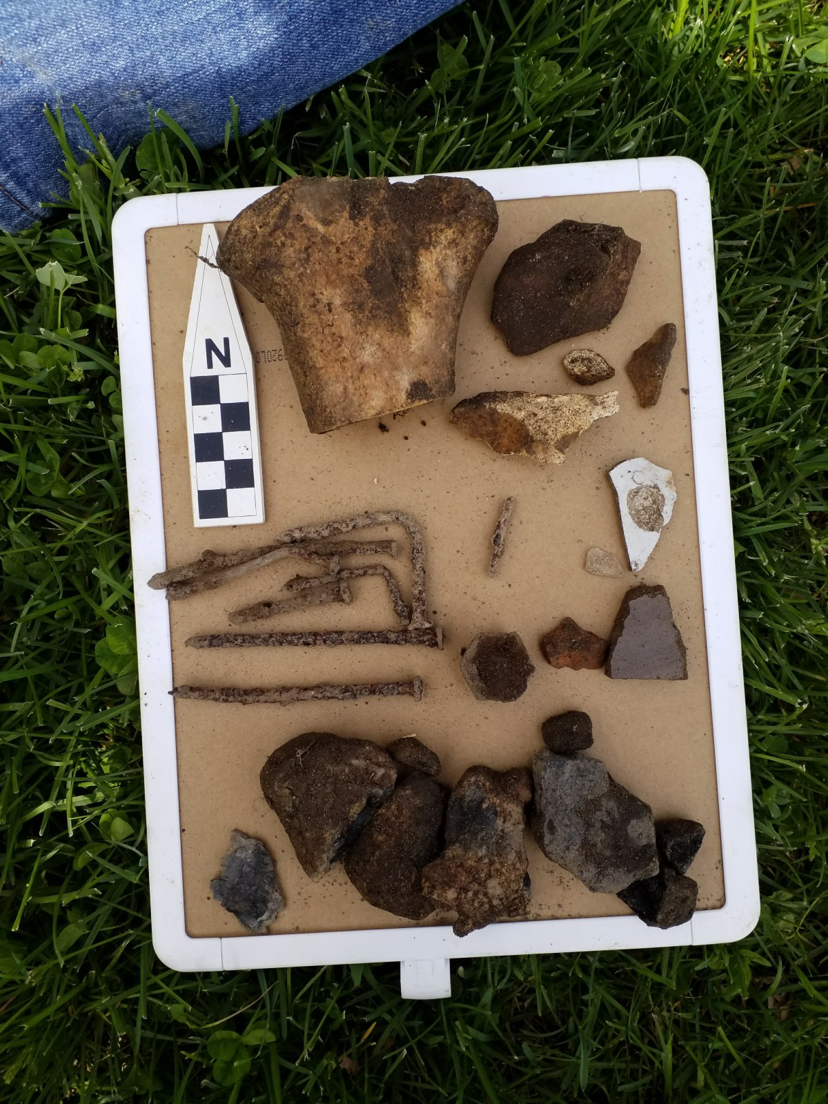 Artifacts from a shovel test unit within the Shaw/Hagadorn survey area.