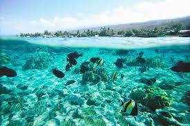 hawai 12