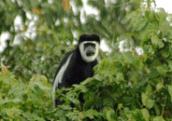 primate_8