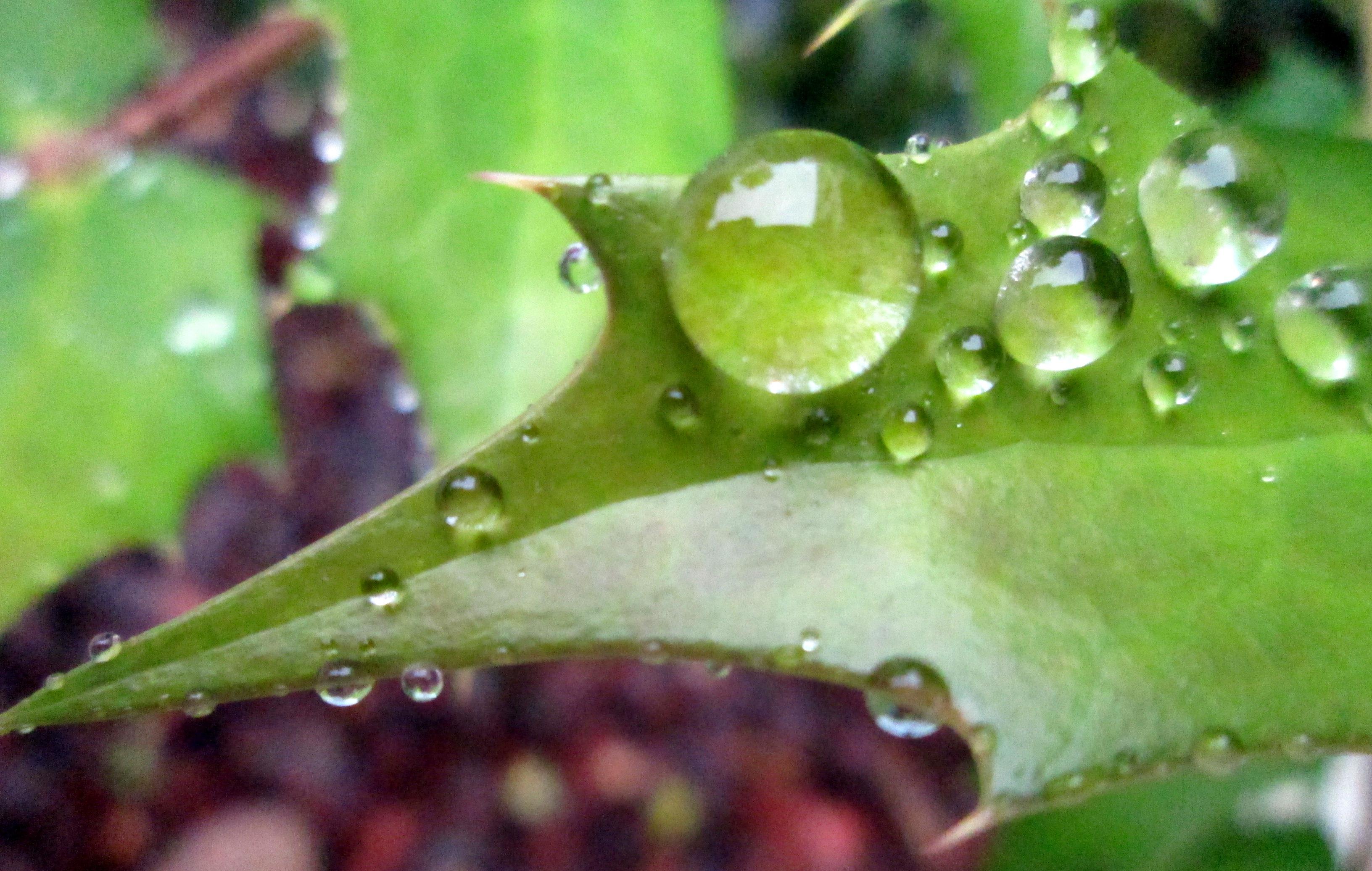 gotas sobre hojas  Campus Universidad de Navarra