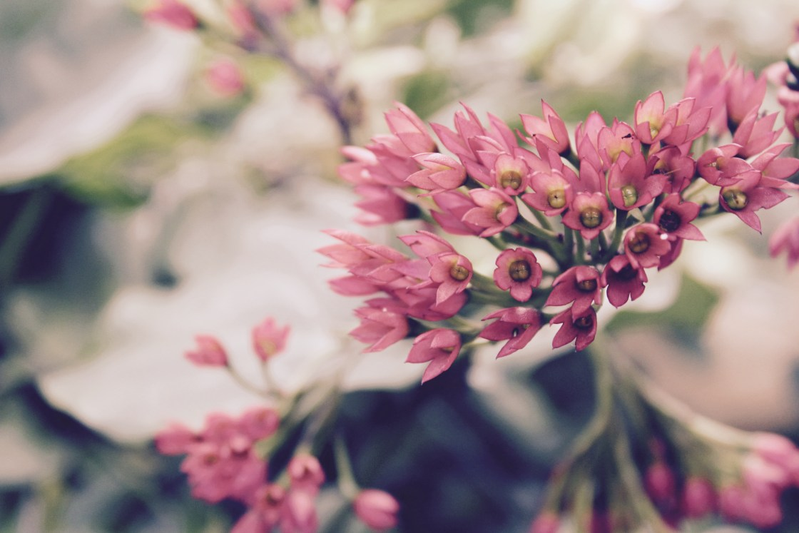 denver-botanical-garden-camryn-rabideau-freelance-writer-boston
