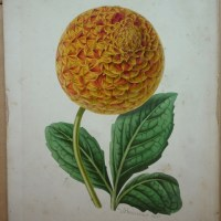 Exploring our archives – uncovering hidden collections at the Botanic Garden
