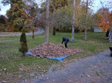 The quick way to move leaves!