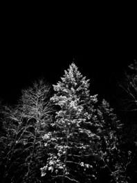 Winter wonder in Wakefield