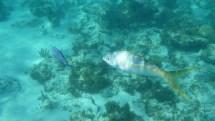 Under the sea . . .