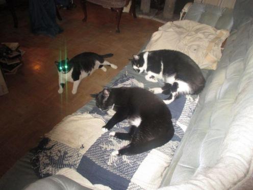 Photo of Klaus J. Gerkens cats