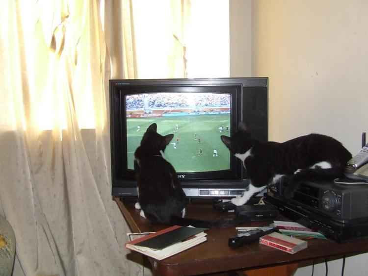 World Cup 2010 - Jazzie and Isidore waited like clockwork for the matches to come on.