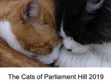 The Cats of Parliament Hill 2019