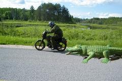 croc_chase.jpg