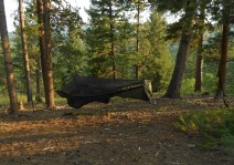 Unless you're riding across the Sahara, or maybe the Labrador tundra, you'll usually find a place to hang your hammock. Photo: Warbonnet
