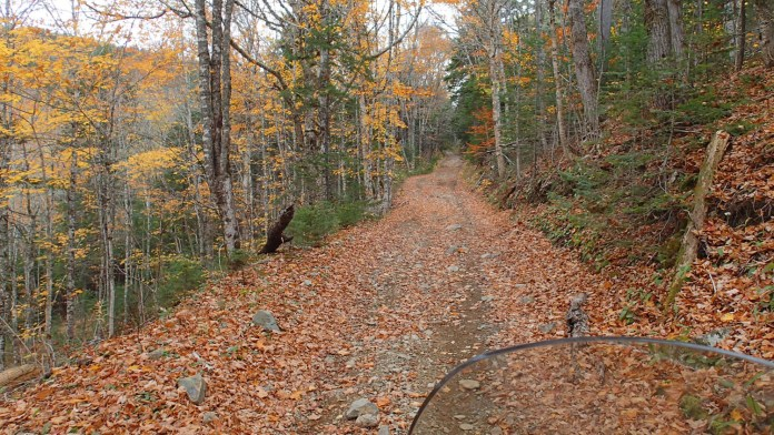 The trouble with leaves is that they hide a multitude of obstacles. Project KLR just flowed over them all. Thankfully.