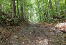Trails were all pretty easy