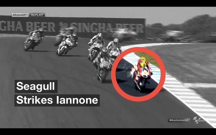 Bird Strike! The circle highlights the violence of the impact as a seagull smashed into Iannone's Ducati. Screen Grab : MotoGP.com