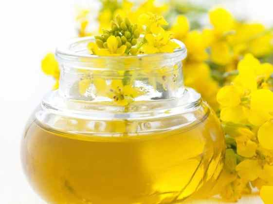 Image result for canola oil helps in burning belly fat