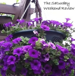 Entrepreneur purple petunias hanging basket .JPG 2