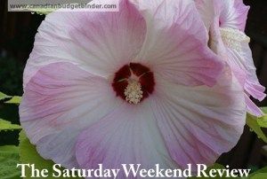 Part-time work while attending University kept me debt free: The Saturday Weekend Review #85