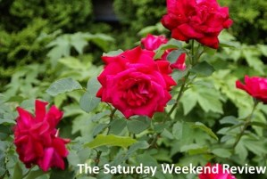 Do you pay debt back on time? : The Saturday Weekend Review #89