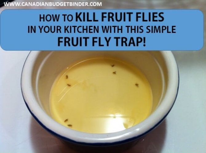 How to kill fruit flies fast with this simple fruit fly trap