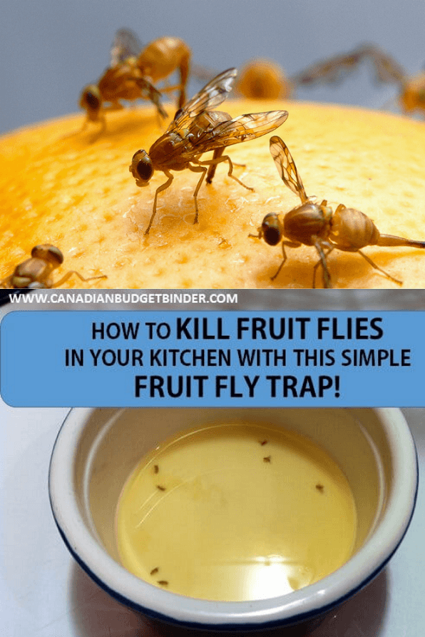How To Kill Fruit Flies Fast With This Simple Fruit Fly