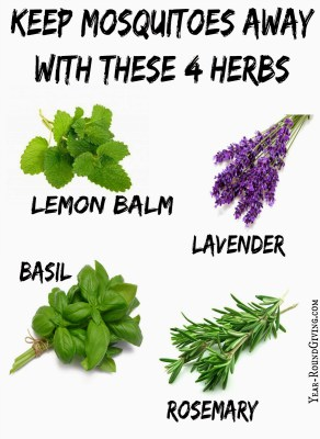 how to keep mosquitos away with herbs