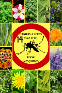 COMMON PLANTS THAT REPEL PESKYMOSQUITOES