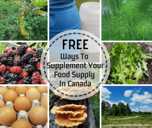free ways to supplement your food supply in Canada